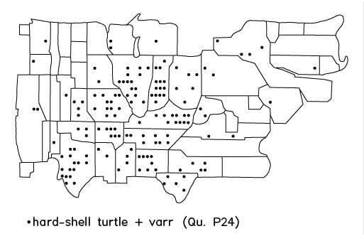 hard-shell turtle